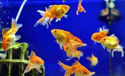 Anche i pesci possono soffrire di depressione. E c'è anche la cura
