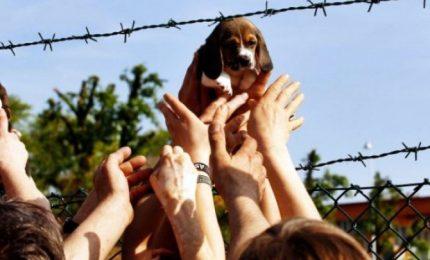 """Processo beagle Green Hill, la Cassazione conferma le condanne. Lav: """"Vittoria epocale"""""""