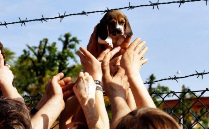 Processo beagle Green Hill, la Cassazione conferma le condanne. Lav: