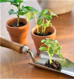 I benefici di un orto in casa. Ecco come realizzarlo
