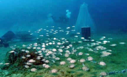 Allarme inquinamento, vivai sottomarini per ripopolare di pesci il Mediterraneo. L'innovativo sistema