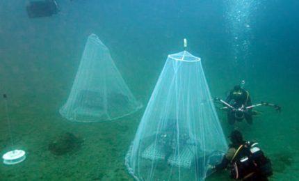 Francia, nursery sottomarine per ripopolare il mare