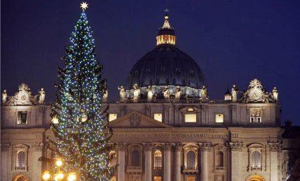 Vaticano, in piazza San Pietro un albero di Natale polacco
