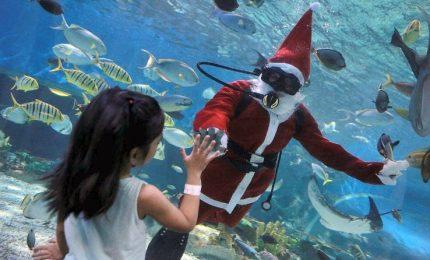 Auguri dall'acquario di Babbo Natale sub