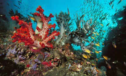 Robot scopre colonie di corallo raro a una profondita' di circa 80 metri