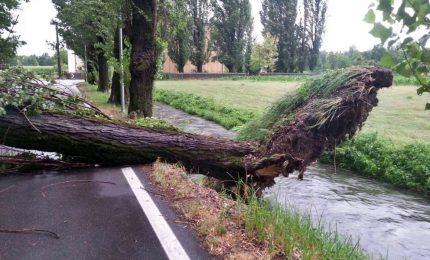Maltempo, 2 uomini morti travolti da alberi