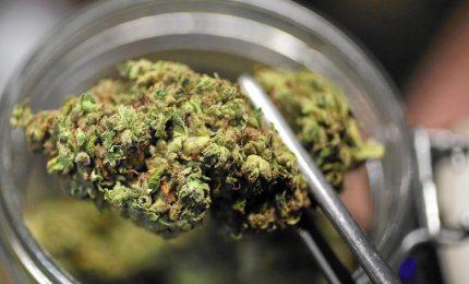 La cannabis sintetica può causa ictus tra i giovani