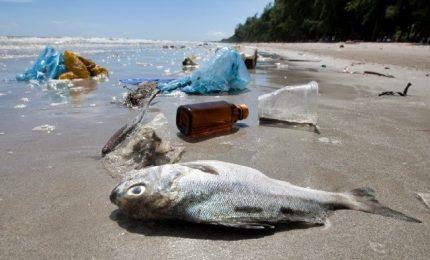 Tutti gli imballaggi di plastica dovranno essere riciclati