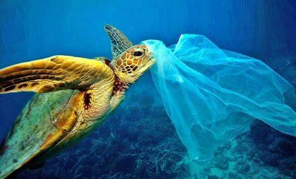 Tartaruga imprigionata nella plastica nel mare delle Eolie