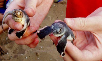 Benin, festa per mettere in mare le baby tartarughe