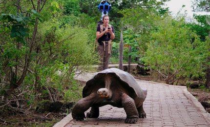 Galapagos, un programma che protegge le ultime tartarughe giganti