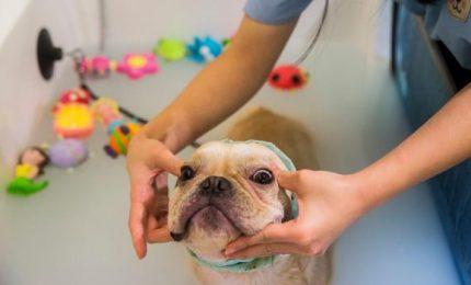 Bagno di latte e ossigenoterapia, vita da cani a Hong Kong
