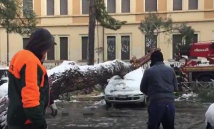 Neve a Roma, albero cade e taglia in due un'auto