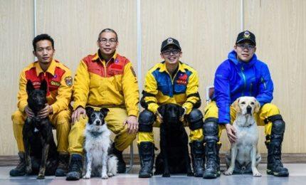 Taiwan, cani per trovare superstiti sotto macerie