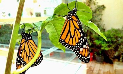 Aperta casa farfalle a Siracusa, ospita decine di esamplari