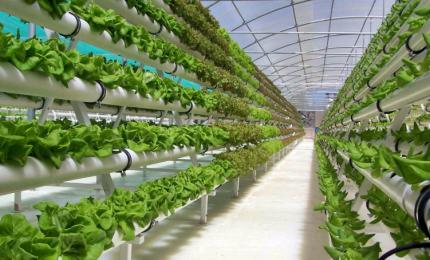 Una farm dove si coltivano verdure con scarti prodotti da pesce