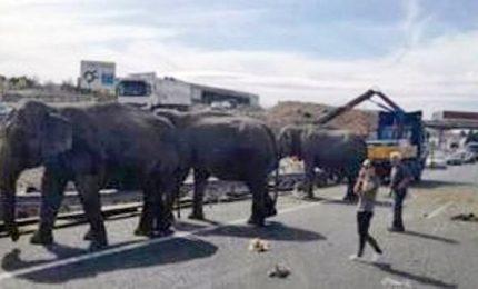 In Spagna si ribalta camion del circo, muore un elefante Spagna