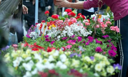 """A maggio l'evento """"Natura Mania"""" tra arte, benessere e verde"""