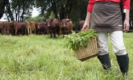 Sempre più giovani con la zappa, cresce il popolo degli hobby farmers