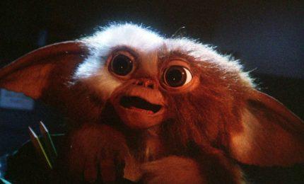 "In arrivo reboot ""Gremlins"". Columbus: ""Ci sto lavorando"""