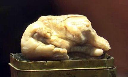 All'asta la più grande perla di acqua dolce al mondo. Era dell'Imperatrice Caterina II di Russia