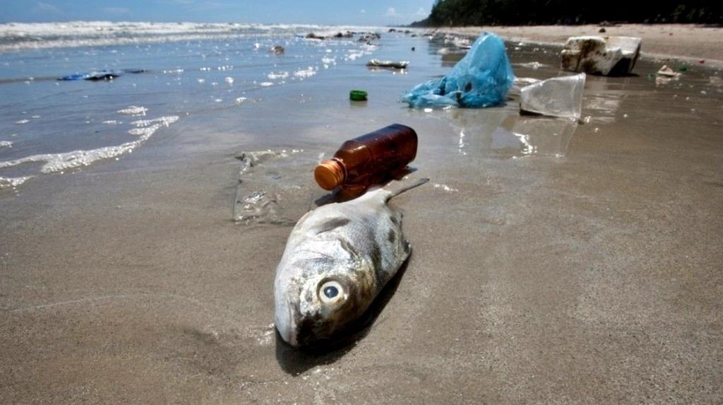 Stop a cotton fioc e piatti di plastica. Dovranno essere fabbricati con materiali sostenibili