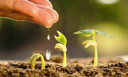 """Le piante si """"riconoscono"""", e sono più """"felici"""" se vicine"""