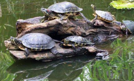 Kenya, una clinica per le tartarughe che hanno mangiato plastica