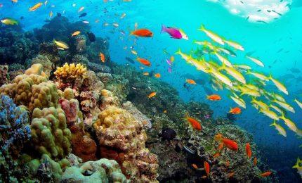 La barriera corallina del Belize non è più fra i siti in pericolo