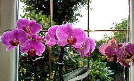L'orchidea, il nuovo elisir di lunga vita per la pelle