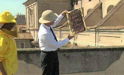 Alveari sui tetti per monitorare la qualità dell'aria