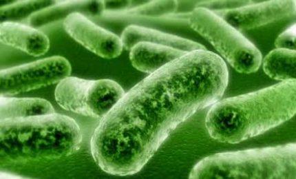 Findus, ritira lotti minestrone surgelato per rischio listeria