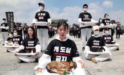 Seoul, protesta choc con cuccioli morti: stop al massacro di cani