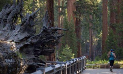 Usa, le fiamme minacciano il parco nazionale di Yosemite