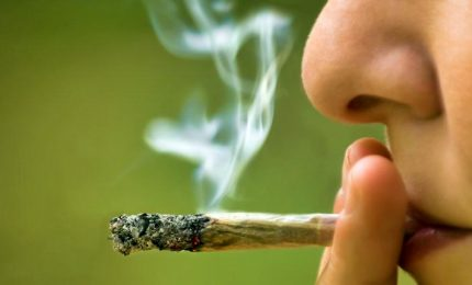 Cassazione, è reato commercio prodotti derivati da cannabis light