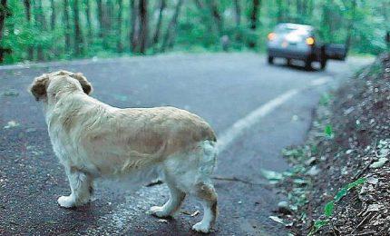 Gianni Morandi nello spot contro l'abbandono degli animali