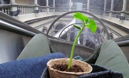 Arte e scienza, le piante reagiscono alla presenza dell'uomo