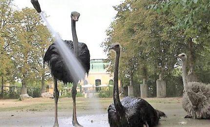 Caldo record, allo zoo di Vienna si corre ai ripari