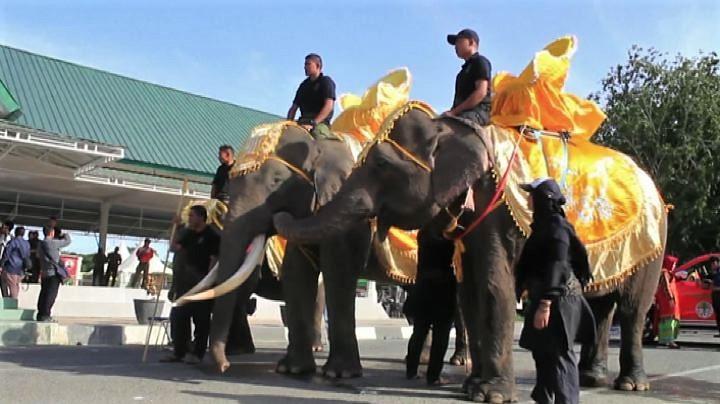 La parata degli elefanti di Sumatra a Banda Aceh