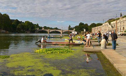 A Torino, controlli sul fiume Po su presenza di alghe infestanti