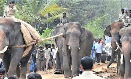 Il rehab per gli elefanti selvaggi che minacciano l'uomo