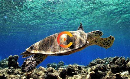 """Il """"Pronto Soccorso del Mare"""" salva due tartarughe, Circe e Billa ora sono libere"""