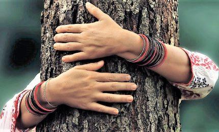 Abbracciare un albero fa bene allo spirito e al territorio