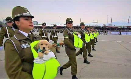In Cile i cani poliziotto imparano mestiere da cuccioli