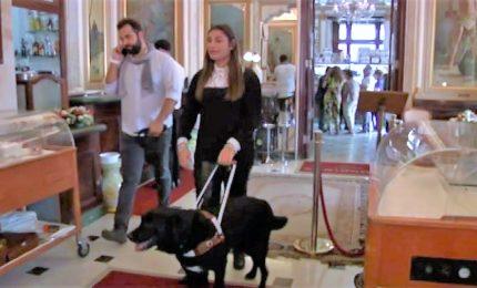 """Caffè Gambrinus apre ai cani guida: """"Scusate, perso la testa"""""""