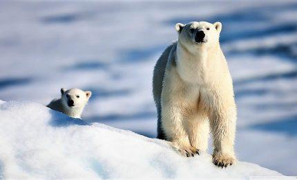Wwf: animali selvatici diminuiti del 60% in 44 anni