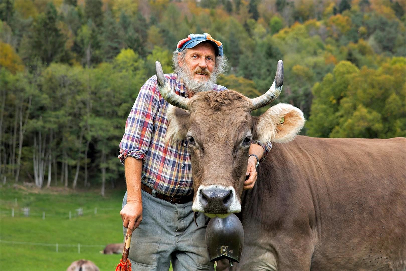 Domenica referendum per salvare le corna delle mucche