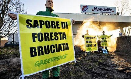 Greenpeace in azione contro deforestazione per olio palma