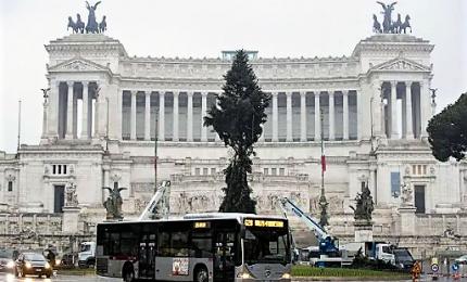 """È arrivato """"Speraggio"""", l'albero del Natale 2018 a Roma"""
