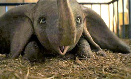 "Il tenero ""Dumbo"" rivive in live action, firmato da Tim Burton"